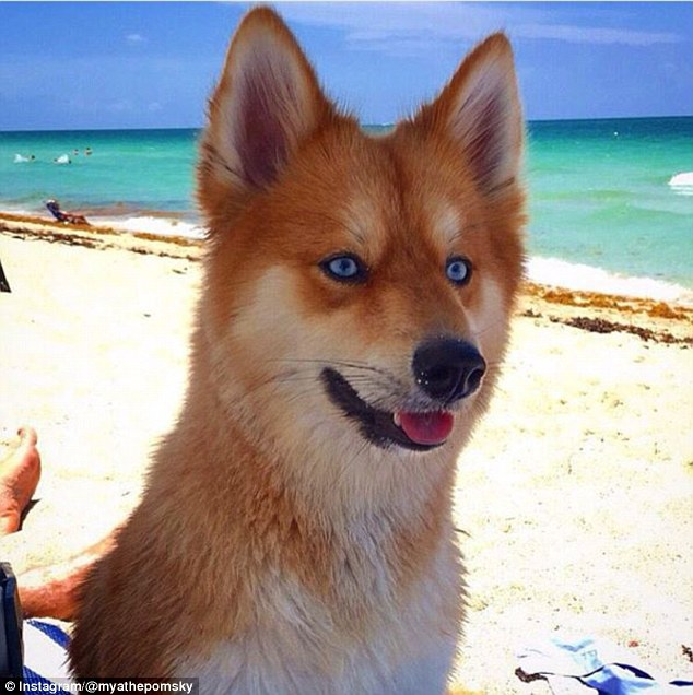 Róka vagy kutya? Döntsd el mit látsz a képen