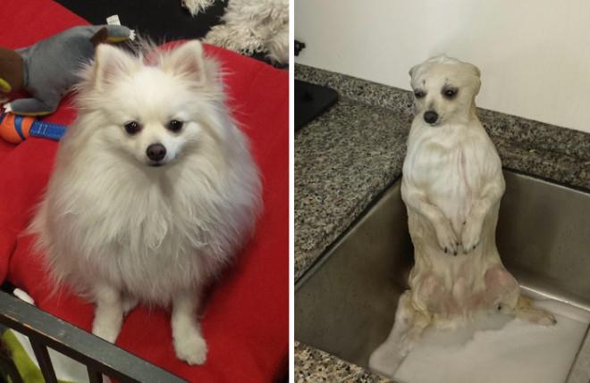 9 eszméletlenül aranyos kutyafotó, fürdés előtt és után!