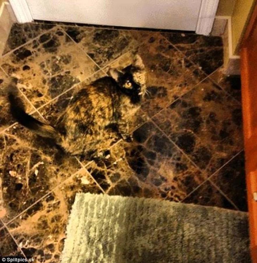 Rejtőzködő cicusok - megtalálod az ötödiket?