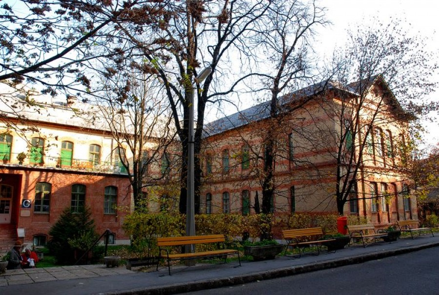 Magyarország ma: Nincs rühes beteg a Margitban!